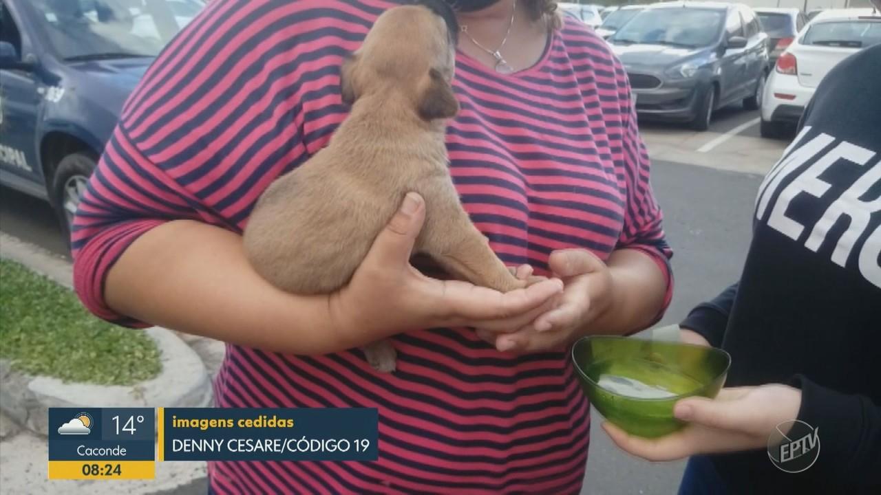 GM quebra vidro do carro para salvar filhote de cachorro que estava preso em Campinas
