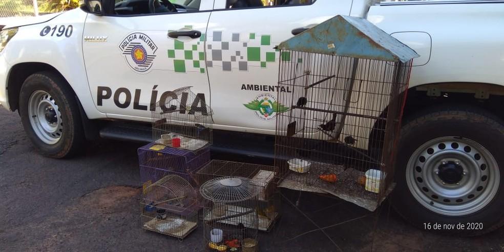 Aves silvestres foram resgatadas de cativeiro no Jardim Everest — Foto: Polícia Militar Ambiental