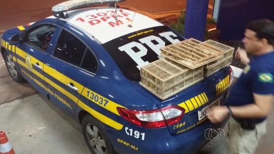 PRF resgata 260 aves levadas em malas sem ventilação dentro de carro