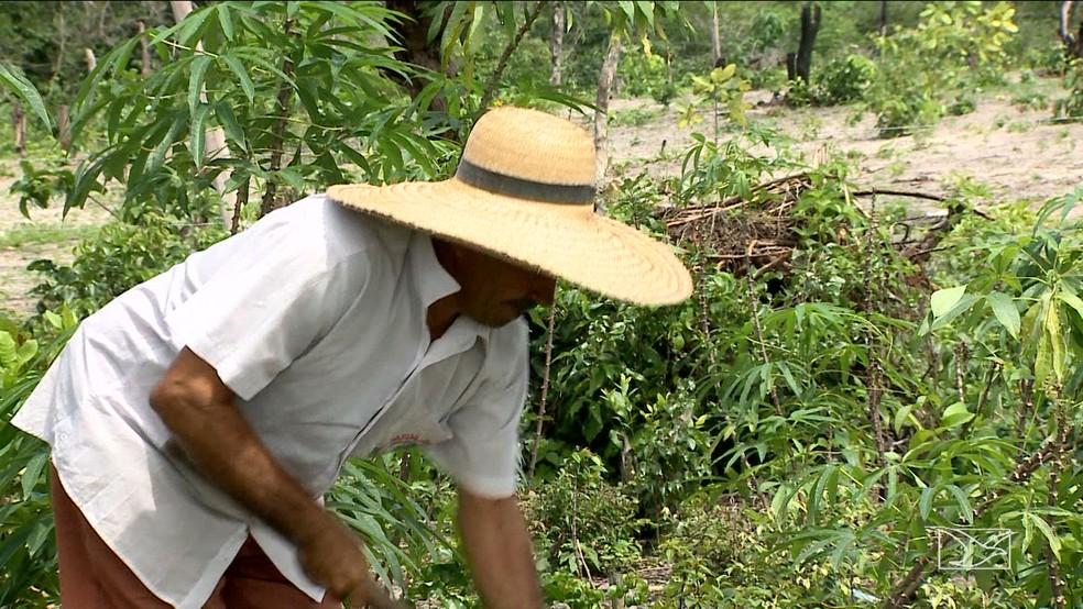 Lavrador Waldecy Sousa é uma das pessoas que podem ser beneficiadas com o projeto (Foto: Reprodução/TV Mirante)