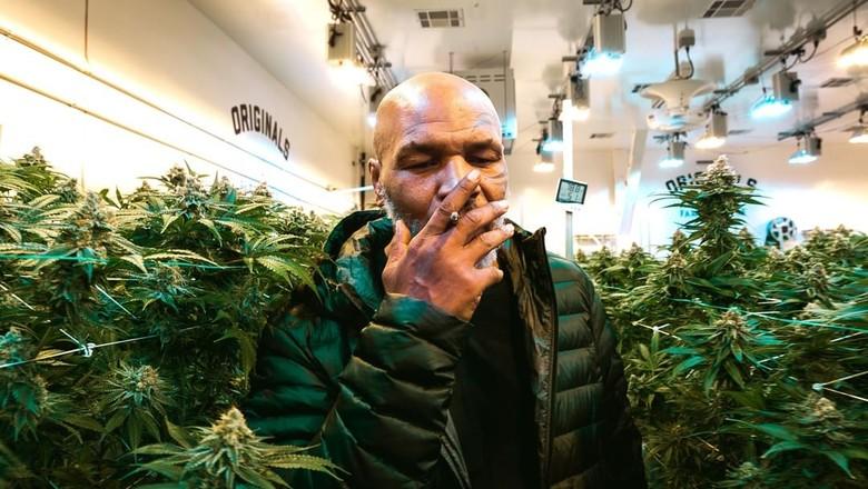 Myke Tyson em meio à plantação de maconha de sua marca (Foto: Reprodução/Tyson Ranch/Instagram)