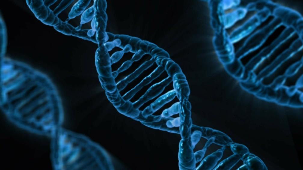 Os genes também influenciam no nosso peso (Foto: PublicDomainPictures/Pixabay)