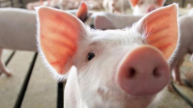 Porco (Foto: TriOakFoods/Facebook)
