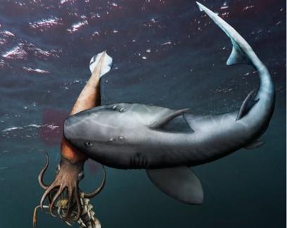 Fóssil preserva lula se alimentando ao ser morta por tubarão no Jurássico