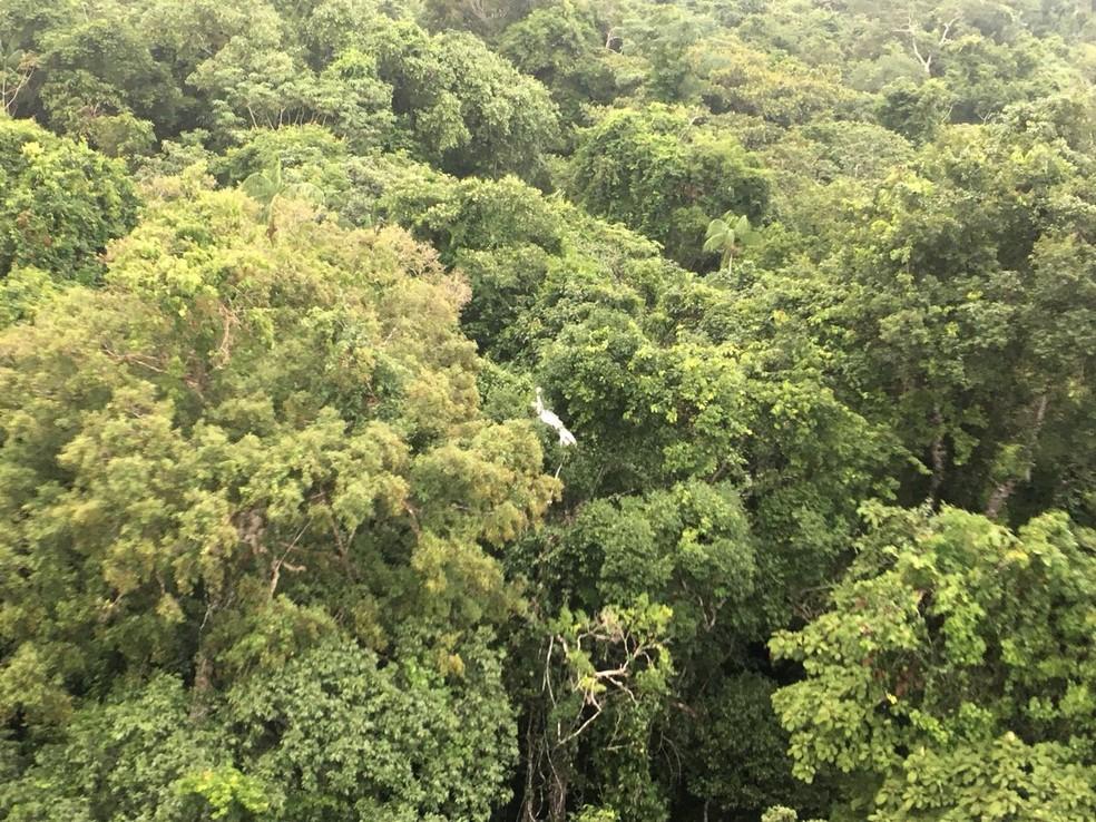 Mata extremamente fechada dificultou resgate dos corpos da família que morreu após queda de avião em Juruena (MT) (Foto: FAB)