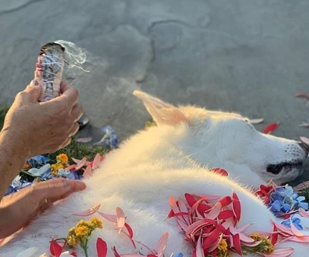 O funeral da cachorrinha Dolly, que pertenceu a Jennifer Aniston e Justin Theroux (Foto: Instagram)
