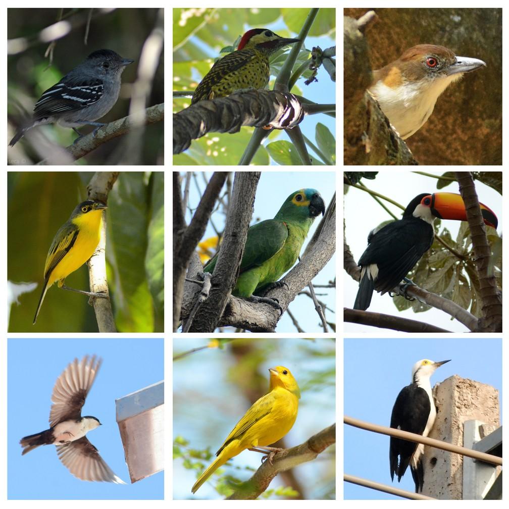 Levantamento identificou a existência de quase 150 espécies de aves em Presidente Prudente — Foto: Fotos: Stephanie Fonseca/G1