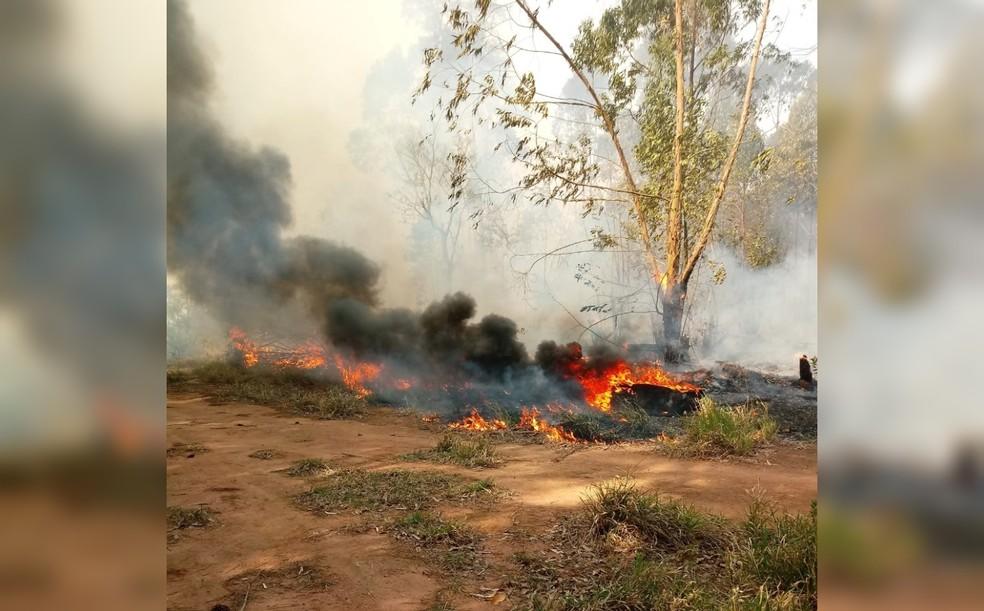 Chamas voltam a atingir plantação de eucaliptos em Sarapuí  — Foto: Prefeitura de Sarapuí/ Divulgação