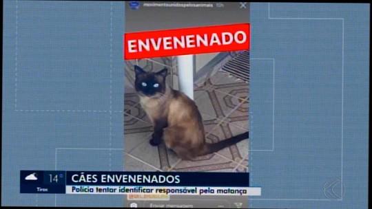 Polícia Civil instaura inquérito para apurar casos de animais envenenados em Santo Antônio do Monte