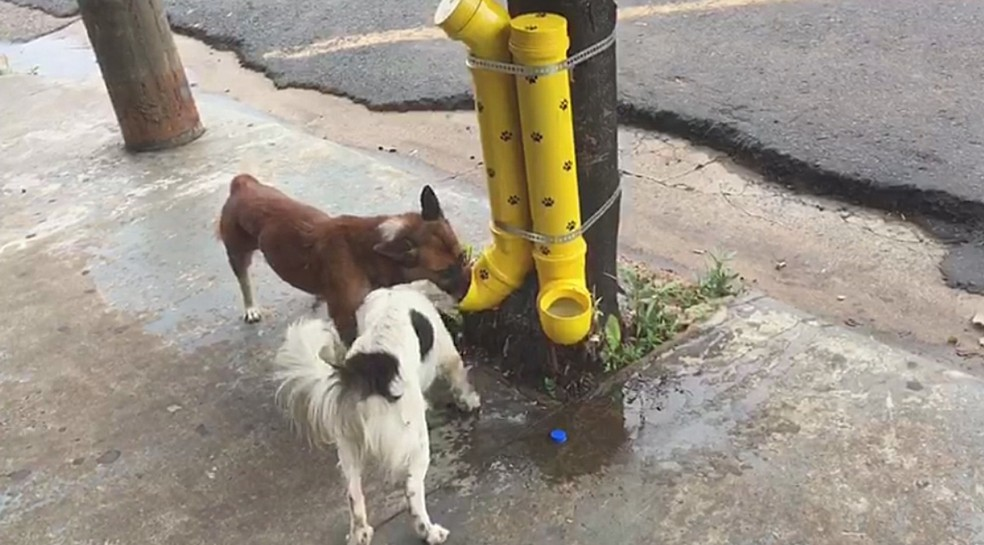 Cachorros comem ração no comedouro criado pela Wancleia (Foto: Reprodução/TV TEM)