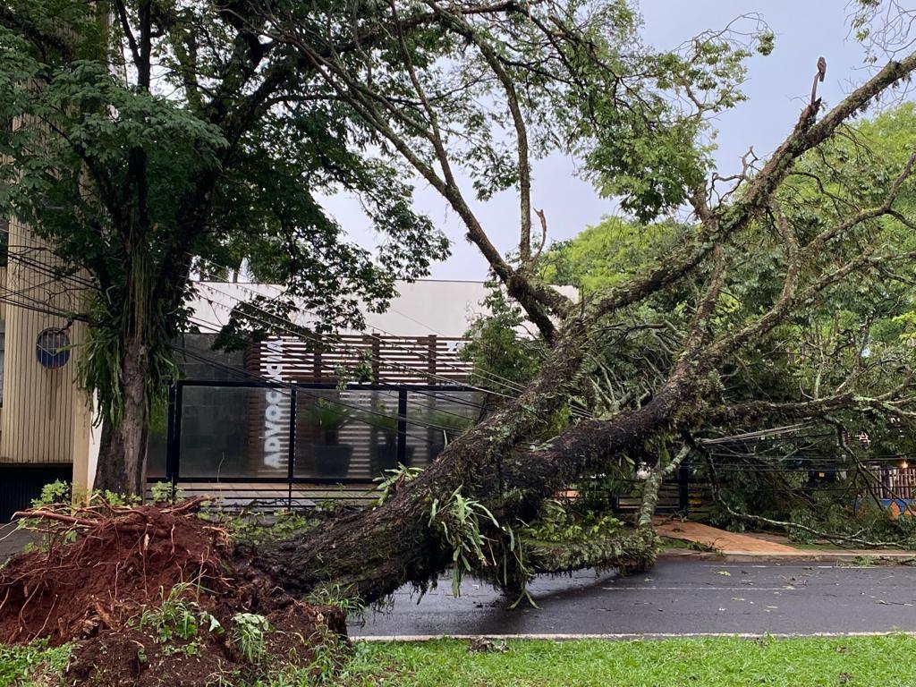 Temporal derruba árvores, causa estragos e alaga Avenida Colombo, em Maringá