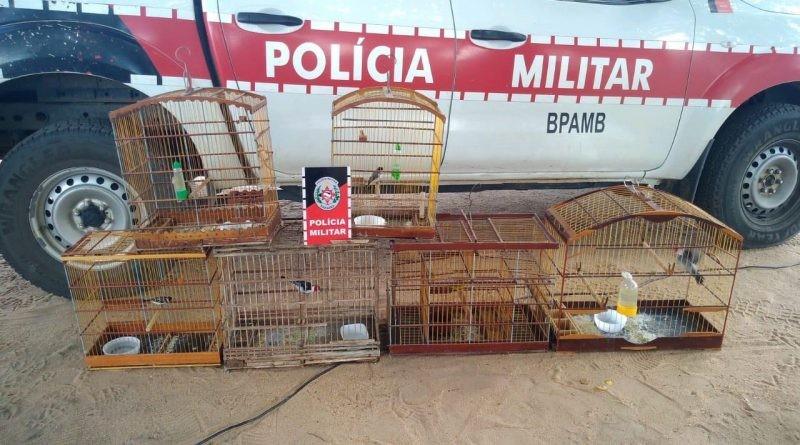 Polícia encontra cativeiro com aves silvestres mantidas em cativeiro, em Pilar, PB