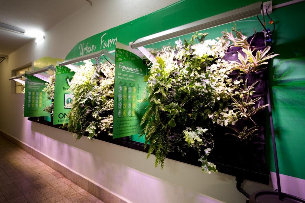 Pesquisa desenvolveu jardim vertical com LED para cultivo em ambientes sem luz — Foto: Esalq-USP/Divulgação