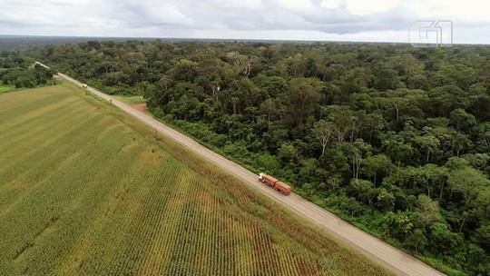 No Pará, rodovia marca fronteira entre floresta e plantações