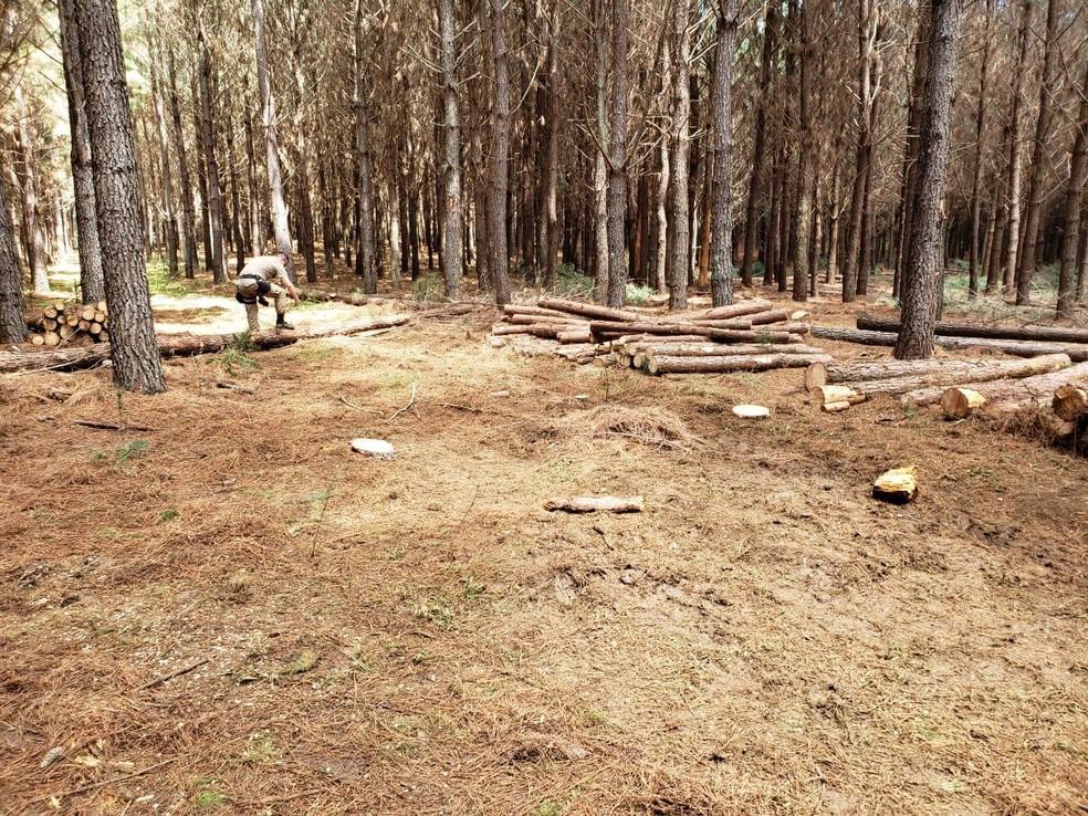Homem é suspeito de matar colega de trabalho em área de reflorestamento  — Foto: IGP/Divulgação