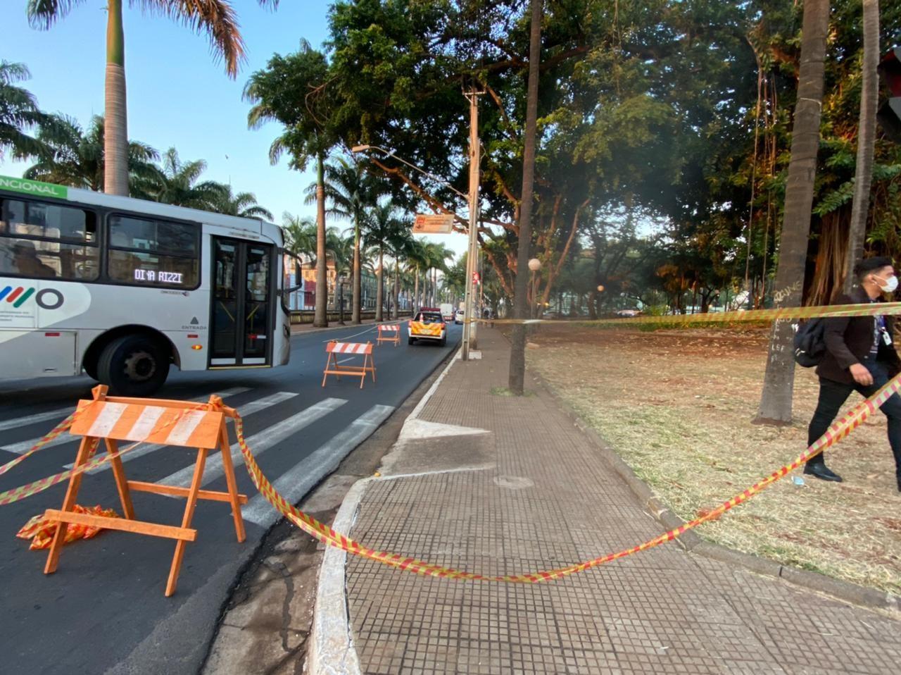 Trecho da Avenida Jerônimo Gonçalves é interditado após fogo em árvore de grande porte em Ribeirão Preto