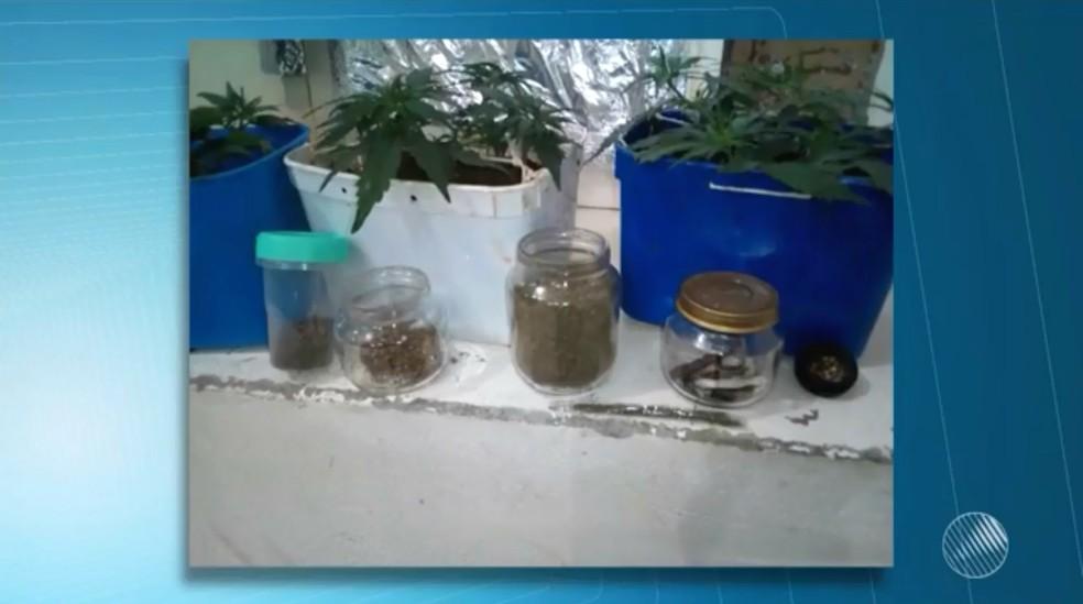 No local, a polícia encontrou sementes de maconha e droga pronta para o consumo (Foto: Reprodução/TV Bahia)
