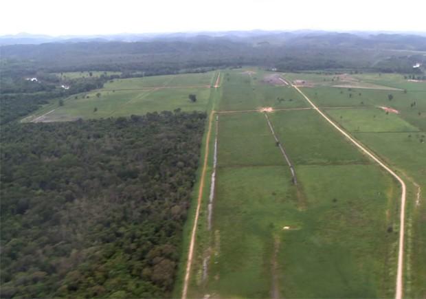 Sobrevôo de helicóptero constatou desmatamento no Vale do Ribeira, SP (Foto: Reprodução/TV Tribuna)