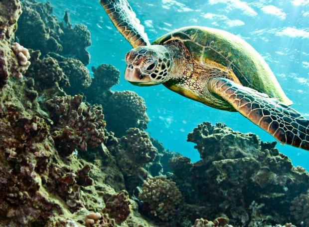Não apenas as tartarugas do mundo todo são ameaçadas pelo descarte do plástico, mas todos os animais marinhos sofrem com o problema  (Foto: Wallpaper Up/ Reprodução)