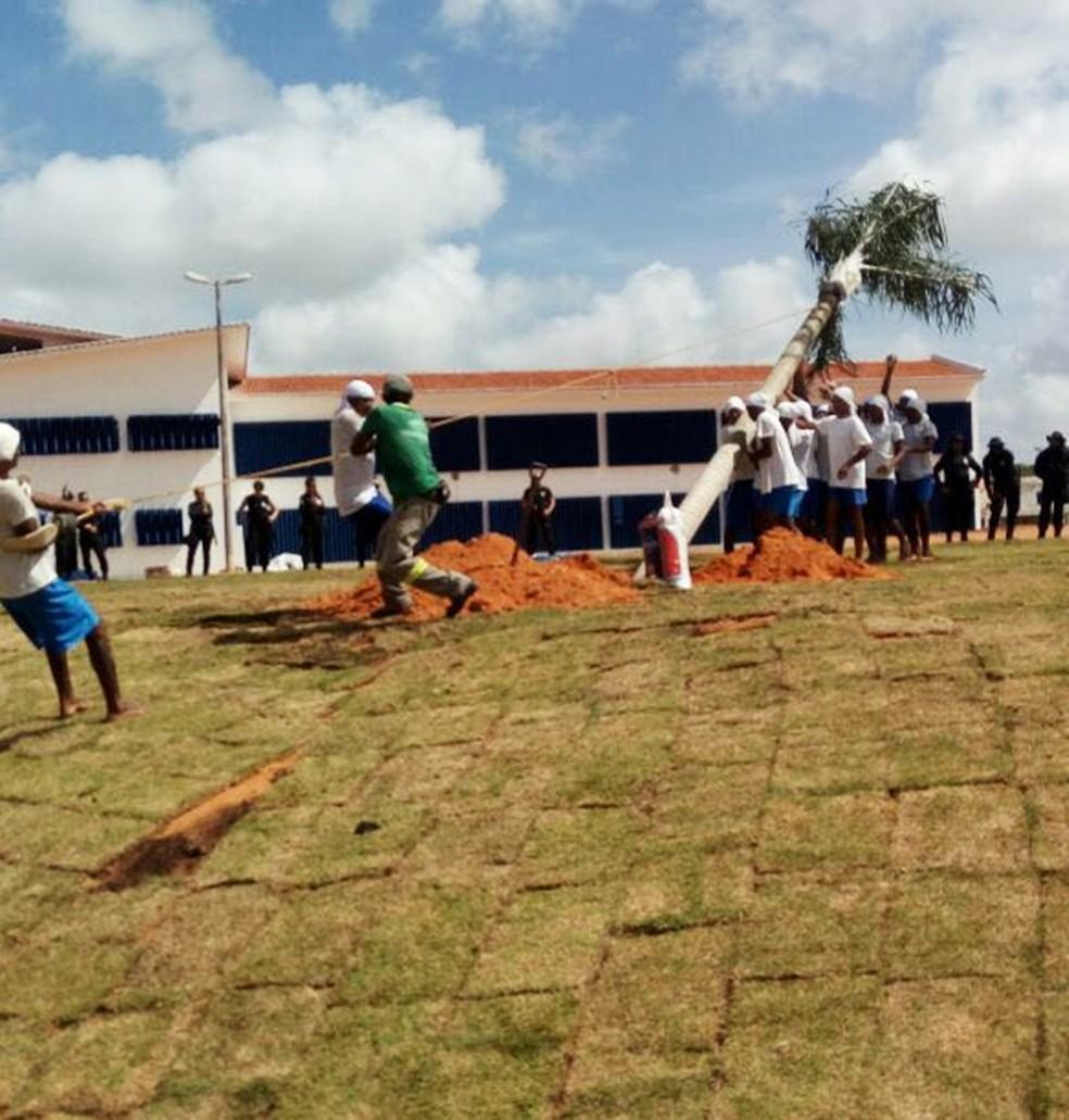 Sejuc disse que o gramado e as palmeiras plantados em Alcaçuz foram doações, e que o serviço foi uma ocupação para os presos (Foto: Sejuc/Divulgação)