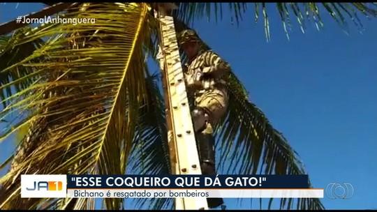 Gato é resgatado de cima de coqueiro, em Goiás