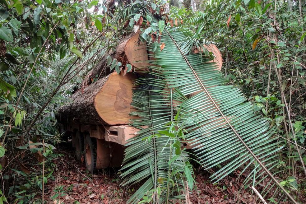 Criminosos tentaram esconder caminhões com madeira ilegal — Foto: Ibama/Assessoria