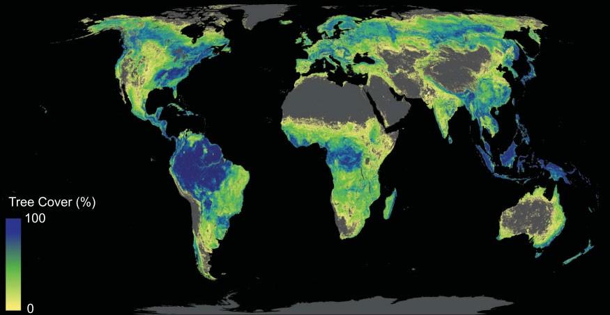 Estudo mapeia áreas do planeta que poderiam receber mais plantações de árvores (Foto: Reprodução/Science)