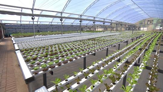 Hortas urbanas produzem alimentos saudáveis em Belo Horizonte