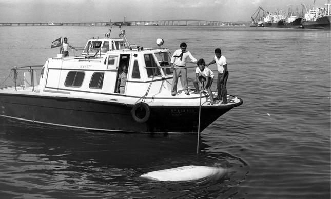 Homens tentam içar baleia morta na Baía de Guanabara, em 1983