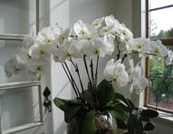 Plantas ornamentais precisam de cuidados especiais durante o frio
