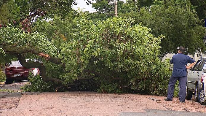 Em Porto Alegre, queda de árvores chegaram a bloquear ruas — Foto: Reprodução/RBS TV