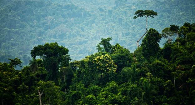 COP-26 é oportunidade para Brasil defender a floresta em pé, dizem empresários