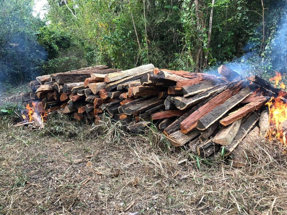 Madeira encontrada pelos índios e que foi retirada da floresta dentro da reserva indígena Arariboia — Foto: Mídia Índia