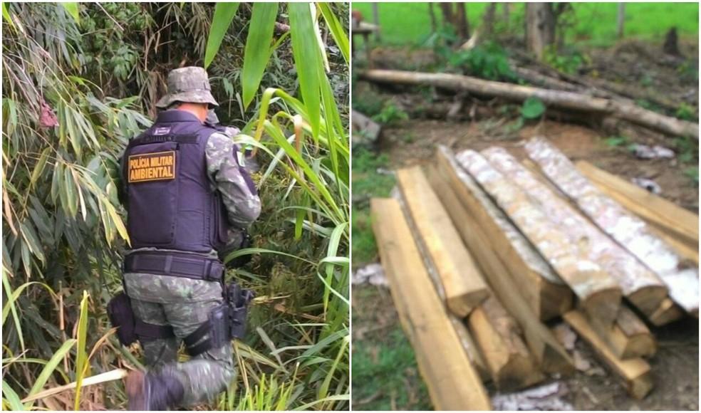 Após denúncia, dupla é flagrada cortando árvore sem autorização no interior do Acre (Foto: Divulgação/PM-AC)