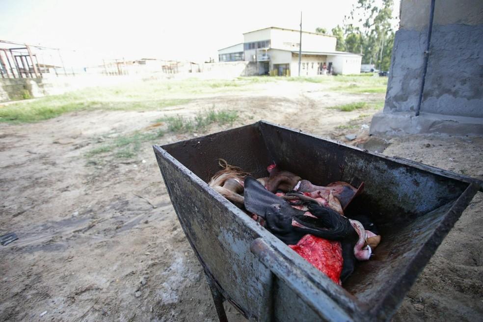 Matadouro de Coruripe apresenta irregularidades trabalhistas e ambientais (Foto: Jonathan Lins / MP)