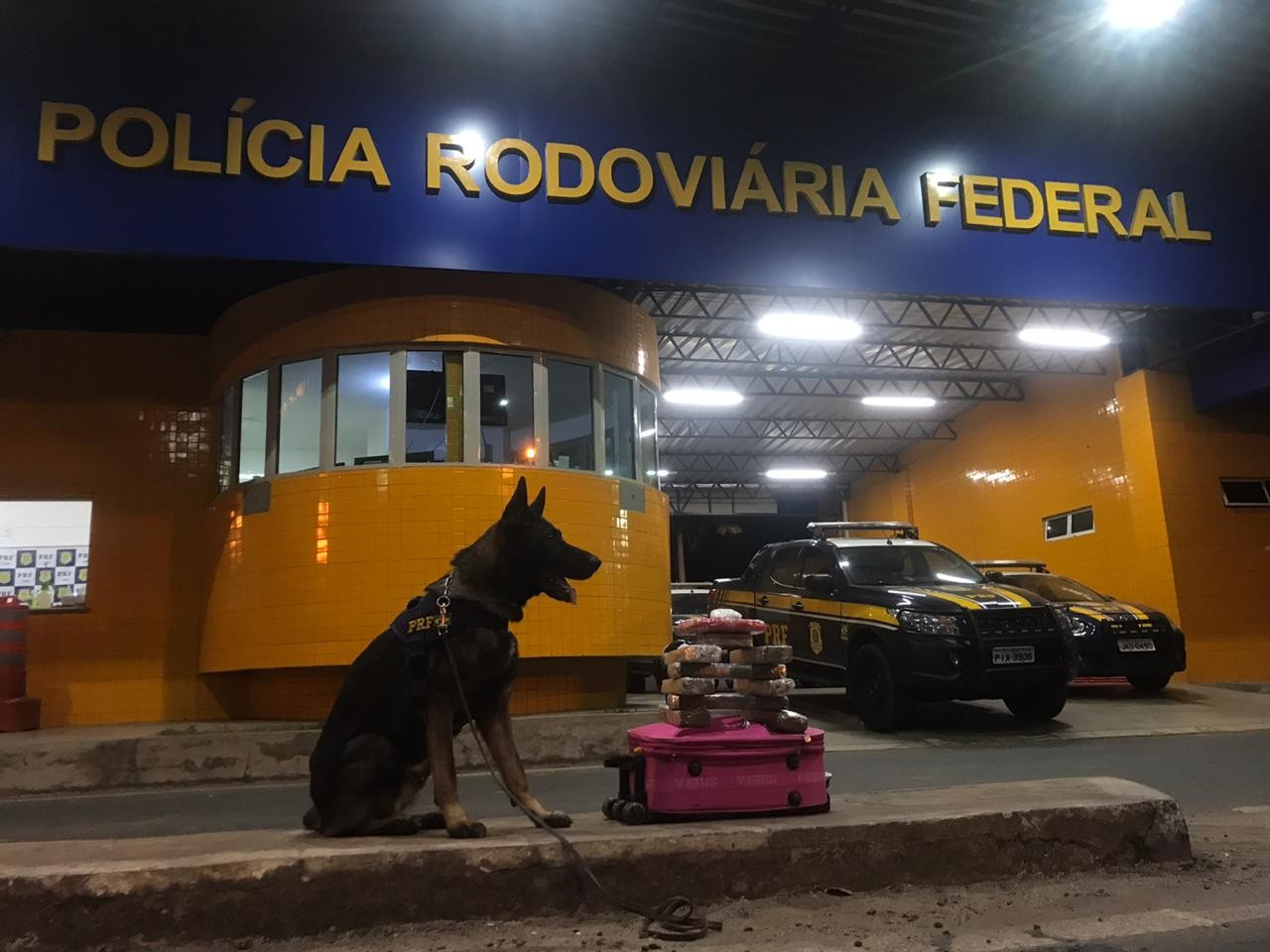 Cão farejador da PRF localiza 7 kg de maconha e 1 kg de cocaína em ônibus em Floriano