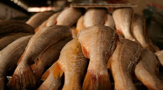 pesca, peixe (Foto: Divulgação)