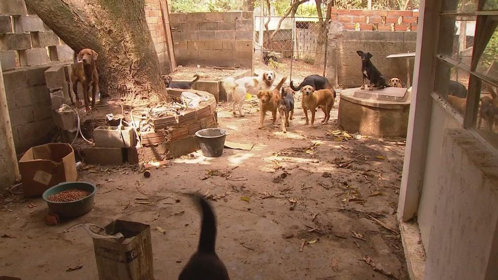 Casal de idosos morre no mesmo fim de semana e deixa 80 cães e gatos em casa — Foto: Witter Veloso/TV TEM