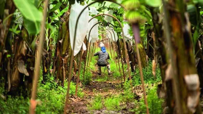 Mais de 40 quilômetros de trilhos aéreos cortam a área produtiva da fazenda do produtor Edson Brok, em Limoeiro do Norte (CE) (Foto: Luiz Maximiano/Editora Globo)