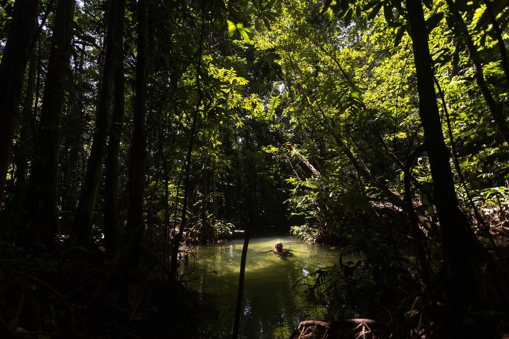 Um igarapé no meio da Amazônia, na Floresta Nacional do Tapajós — Foto: Marcelo Brandt/G1