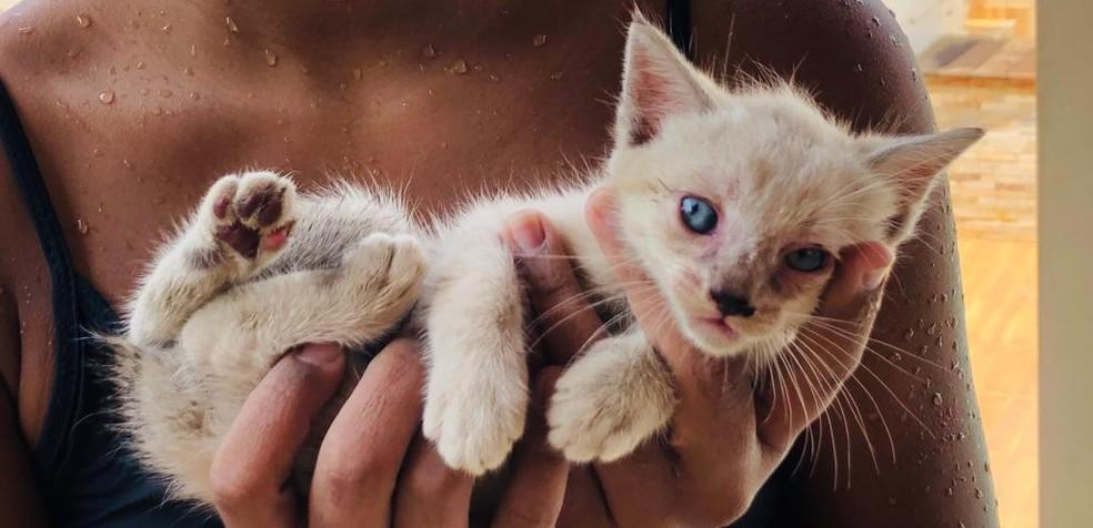 Apesar do susto, gatinha não se machucou ao ser jogada da janela de carro no AC — Foto: Reprodução