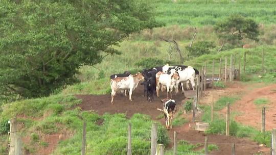 Produtores rurais de Uberaba correm contra o tempo para fazer cadastramento