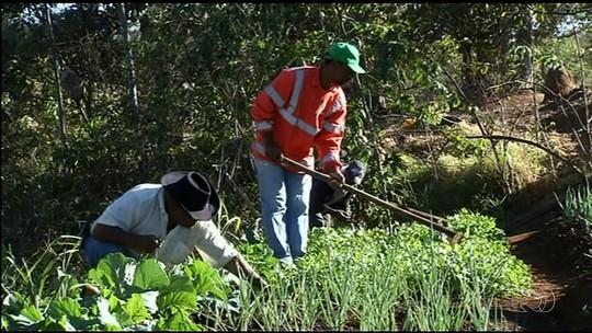 Moradores transformam área usada como lixão em horta comunitária, em Anápolis