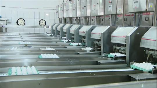 Produção de ovos cresce em Minas Gerais