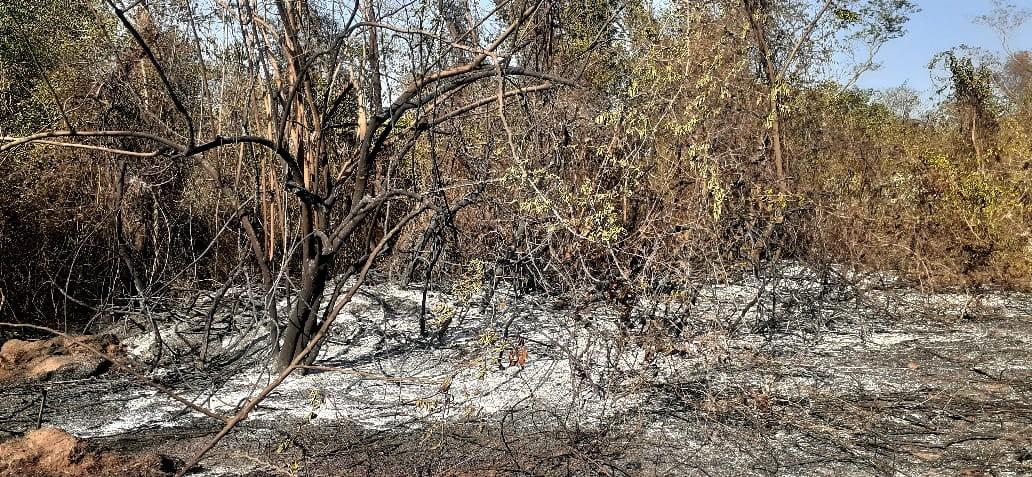 Bombeiros controlam chamas que atingiram cerca de 40% de reserva de mata atlântica em Bauru