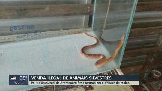 Polícia Ambiental realiza operação de combate ao tráfico de animais silvestres em Araraquara e região