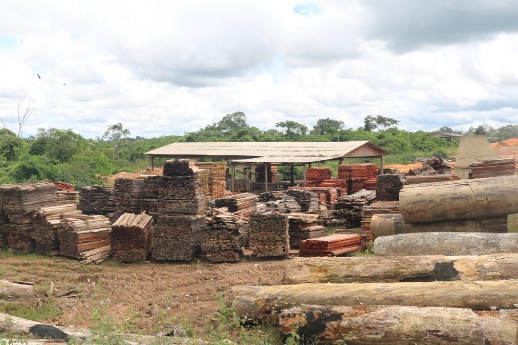 Madeireira é multada em mais de R$ 190 mil em Manicoré — Foto: Divulgação