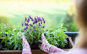 Passo a passo para cuidar das plantas no frio