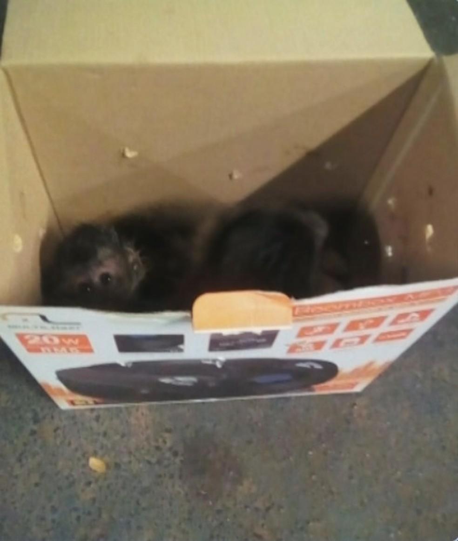 Macacos foram encontrados dentro de caixas no carro da mulher — Foto: Divulgação/Polícia Ambiental