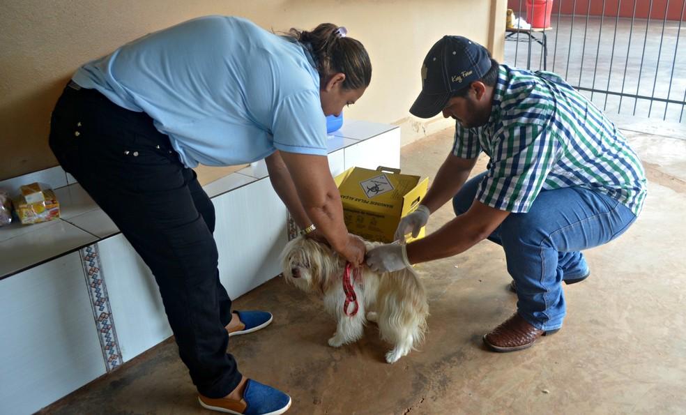 Vacinação contra a raiva é realizada em Penápolis — Foto: Fernanda Bonilha/G1